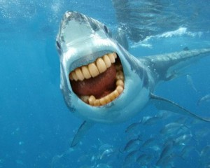 Sharks not Scary with Human Teeth